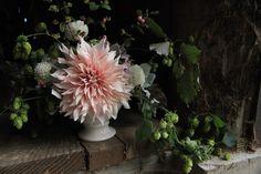 Field to Vase: A Friend to Local Flower Farms: Gardenista