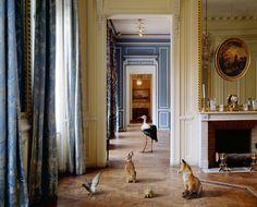 animaux palace 02 Des animaux dans des palaces  photographie bonus art