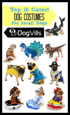 These top 10 cutest dog costumes for small dogs are perfect for Halloween or just showing off your pooche's fabulous style!