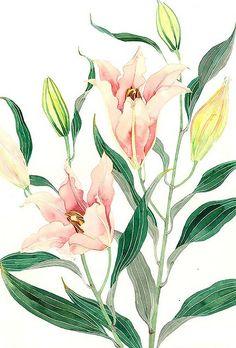 Lillies 2 GABBY MALPAS