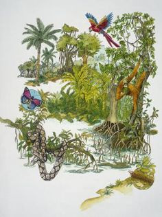 10 Things to Know About the Rainforest