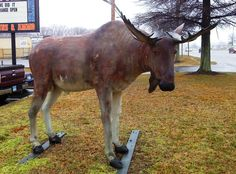 Okay, okay, not native Maryland wildlife.  Just a statue in front of a local business.