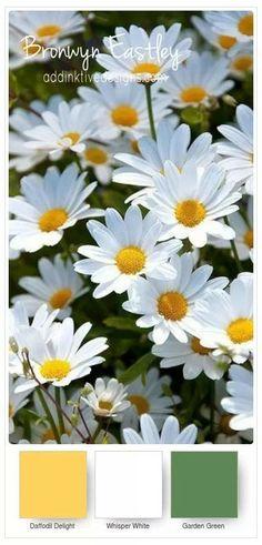 Daisy Delight color combination