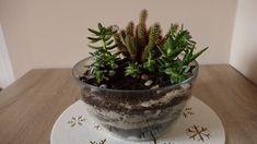 Terariu cactus si suculente Cactus, Planter Pots
