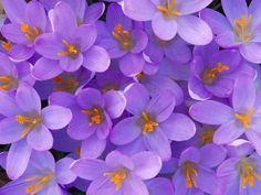 imagenes flores fondos mas lindas