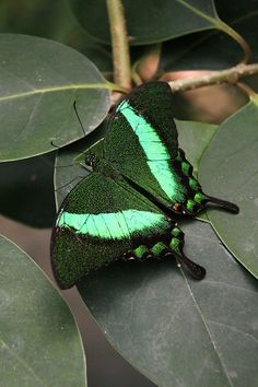Most butterflies are amazingly beautiful like this!