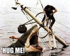 Sharks are misunderstood creatures...