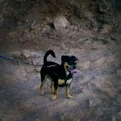 Hiking with Zeus
