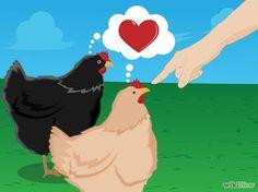 Elas são ótimos animais de estimação. As galinhas são criaturas muito sociáveis e se você criá-las desde pintos (ou desde quando estiverem ainda no ovo) eles vão formar um vínculo com você e ser animais muito leais. As galinhas domesticadas vão se sentar no seu colo, alimentar-se de sua mão, cacarejar em saudação a você e podem até mesmo vir quando forem chamadas.