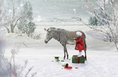 Getting Ready for Christmas Copyright Kimberly Scott PhotoART  Children's Storybook Sessions in Anchorage Alaska Custom Photography Sessions styled to fit your favorite storybook or theme. www.kimberlyscottphotoart.com  Little Girl Painting a Zebra standing on christmas presents in the winter woods while it snows.