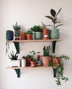 Indoor Plant Decor ideas are fun for people of all ages. You don't have to have a huge garden or your Indoor Plant Decor Ideas are perfect for small garden arrangements. There are many different plants that are suitable for… Continue Reading →