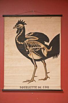 Chicken - inside view