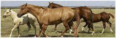 Artikeln und Zubehör für Reiter, Pferd und Pony Horses, Animals, Swimming, Pets, Doggies, Gifts, Animaux, Horse, Animal