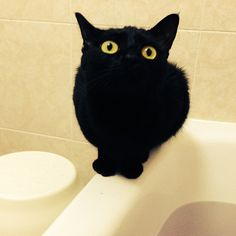 staying firmly perched on the edge of a full bath tub.