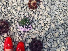 A színes virág olyan díszei a kertnek, mint ékkövek a koronán! Használjuk hát bátran őket! 🌸🌷🏵️ #virág #inspiráció #kulsoepiteszet #flowersofinstagram #flowers #colorful #color #kert #kertdesign #terasz #varosikert #lakberendezés #növénytartó #kaspó #budapest Budapest