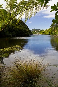 Zealandia, Wellington | © Elyse Childs Photography