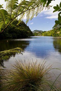 Zealandia, Wellington | © Elyse Childs Photography