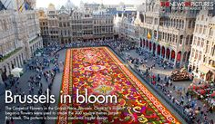 Brussels in Bloom - I love Flowers - this is amazing.