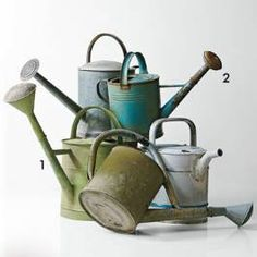 I collect old watering cans. They are great for growing flowers.