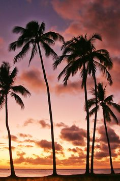 pink palms @ sunset