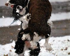 That moment when it FINALLY snows and drops 2 feet so you know you're getting a snowy relaxing day. Relaxing Day, Dogs Of The World, All Dogs, Pet Shop, Your Best Friend, Dog Pictures, Dog Lovers, Snow, Pets