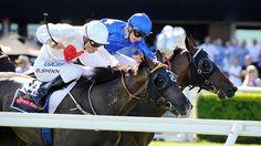 Shinn prevails in two-horse war