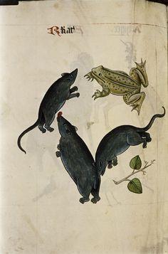 Tudor Bestiary, 1520 | Retronaut