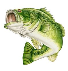 Wide Mouth Bass Clip Art | Wildlife Art