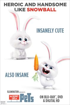 Which pet are you most like? If people think you're crazy, they're probably just jealous of your genius. Own THE SECRET LIFE OF PETS on Blu-ray & DVD Dec Animal Memes, Funny Animals, Cute Animals, Secret Life Of Pets, Illumination Entertainment, Snowball, Disney Love, Disney Pixar, Disney Characters
