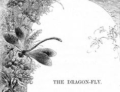 Dragonfly art framing words - it would be easy to pull EMERALD GREEN colors into dragon fly art.