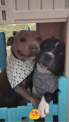 Cute Little Puppies, Cute Dogs And Puppies, Cute Little Animals, Baby Dogs, Doggies, Pet Dogs, Cute Animal Memes, Cute Animal Videos, Cute Animal Pictures