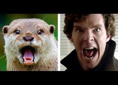 Want to look youthful? Check this Today: http://bit.ly/HzgBSd ..Otters that look like Benedict Cumberbatch. Oh internet thank you for always making my day.