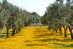 The unique, enchanting atmosphere of Sicily is waiting for you. Scent Of Sicily offers wonderful accommodations in charming locations.http://www.scentofsicily.com/
