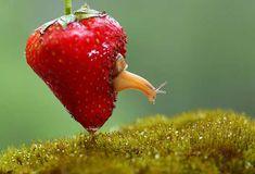 bugs-snails-mushrooms-macro-photography-nature-vadim-trunov-14