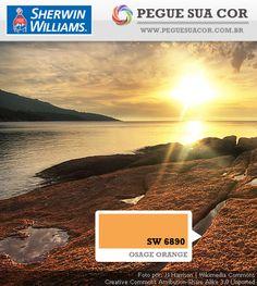 SW 6890 - Osage Orange
