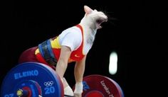 Going To The Gym, As Told By Cats