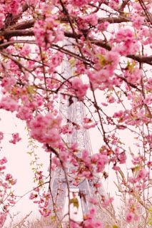 Paris #Eiffel Tower shot wrapped with Cherry blossoms. Je t'aime.