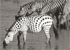 Photos en noir et blanc animaux..                                                                                                                                                                                 Plus