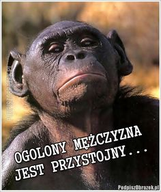 Ogolony mężczyzna Weekend Humor, Motto, Good To Know, Memes, Scary, Haha, Thoughts, Funny, Poster