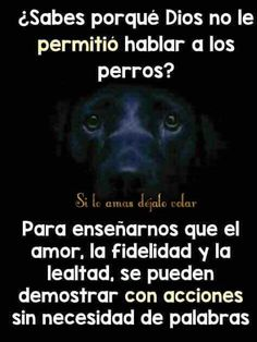 Son angelitos de Dios I Love Dogs, Puppy Love, Pet Dogs, Dog Cat, Animals And Pets, Cute Animals, Stop Animal Cruelty, Animal Quotes, Animal Memes
