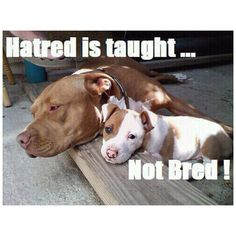 Absolutely :D Love the pit bulls... And all mixes involving them of course!