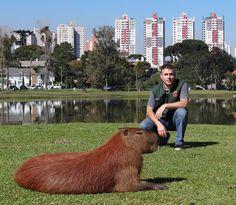 Curitiba - Alexander Welker Biondo