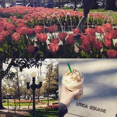Sunshine & coffee are the best cures for a Monday. #tulsa #uticasquare #fraphappy #springtime