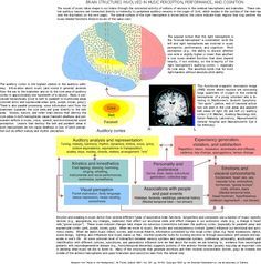 Music And The Brain | html music and the brain musical brain map link http www mos org cst ...