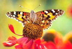 god images butterfly