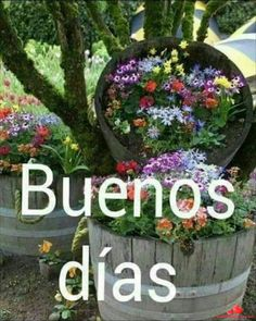 Autoayuda y Superacion Personal Morning Greetings Quotes, Good Morning Messages, Good Morning Images, Good Morning Quotes, Good Morning In Spanish, Motivational Phrases, Plant Decor, Happy Day, Beautiful Landscapes
