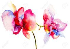 Flores De Orquídeas Rosadas, Ilustración Acuarela Fotos, Retratos, Imágenes Y Fotografía De Archivo Libres De Derecho. Pic 29782027.