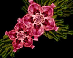 cecelia webber pink flower