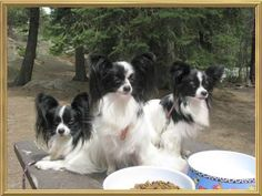 Sampson, Delilah 2 and Suri at Rocky Mtn Nat'l Park