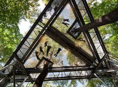 Morris Arboretum Tree Adventure / Metcalfe Architecture & Design,© Paul Warchol